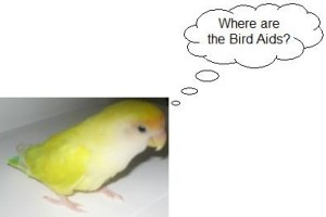 Where are the bird-aids