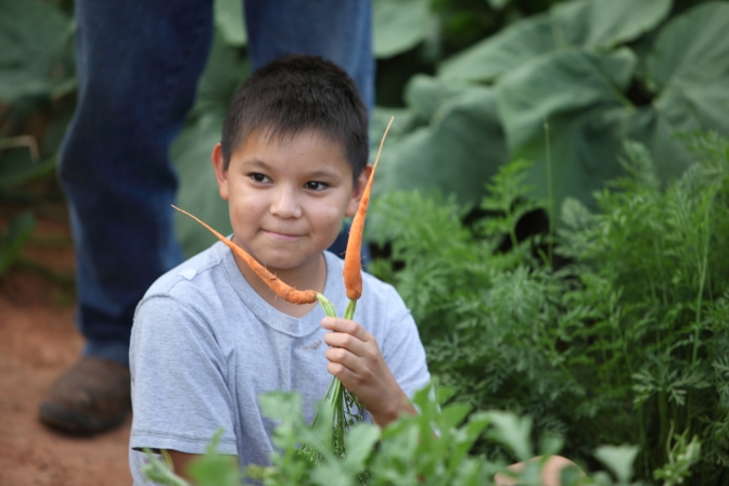 boy-gardening-carrots-740872-wallpaper