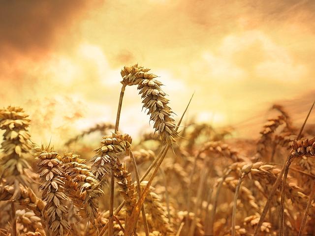 Preparedness & Self-Reliance Quotes – LDS Words of Wisdom