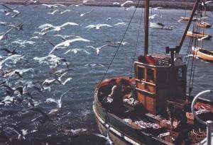 Seagulls commons.wikimedia.org