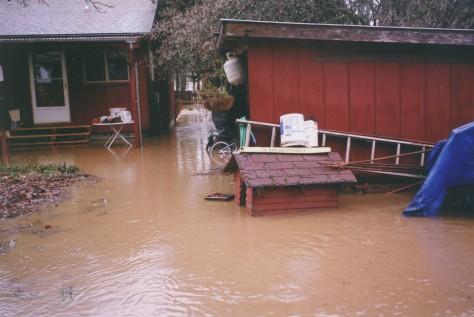 vernonia_flood2